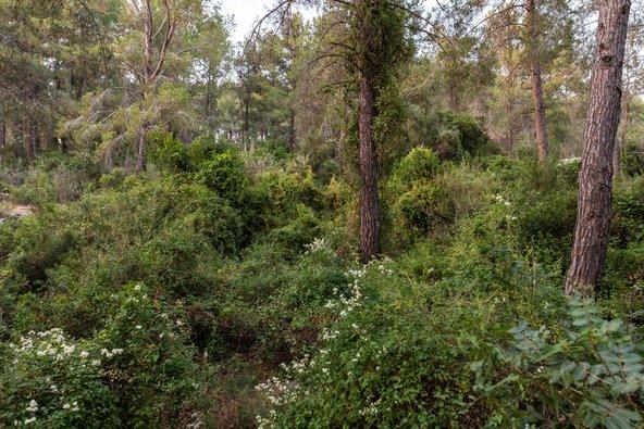 יער חניתה. תחושה של טיול ביער מהאגדות