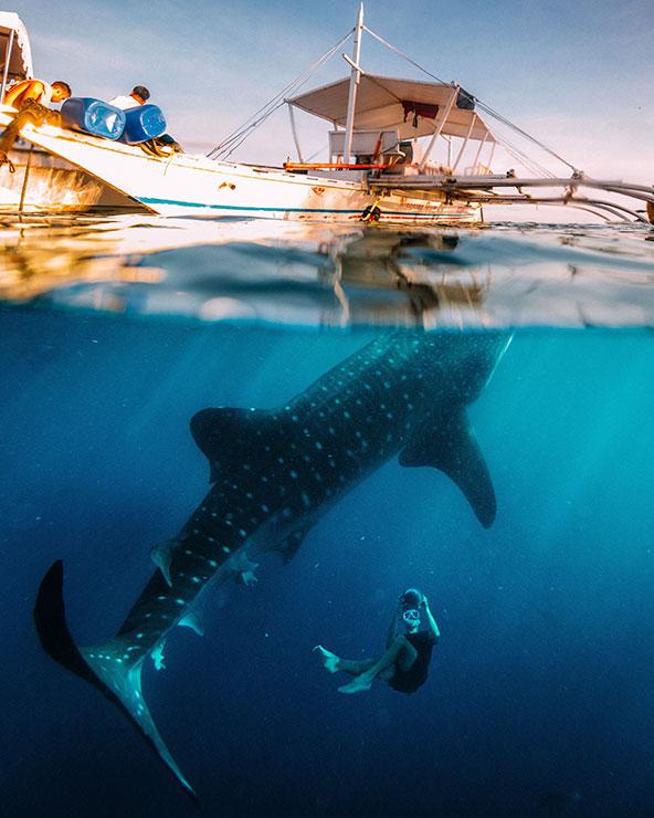 צלילה באי סבו. אתרי הצלילה של הפיליפינים מציעים מגוון תת ימי מדהים