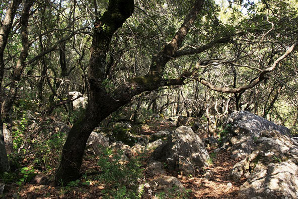 יער ברעם. טיול ביער מהאגדות | צילום: יעקב שקולניק