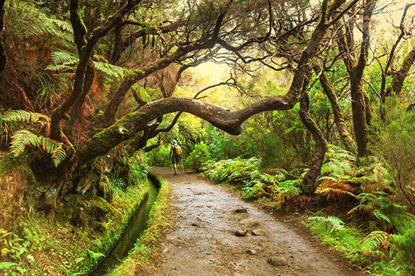 טרק ביער במדירה, צילום שאטרסטוק