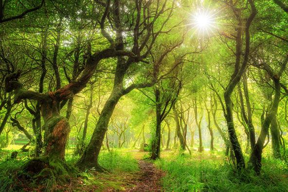 לאוריסילבה, הכי ירוק שיש | צילום: שאטרסטוק