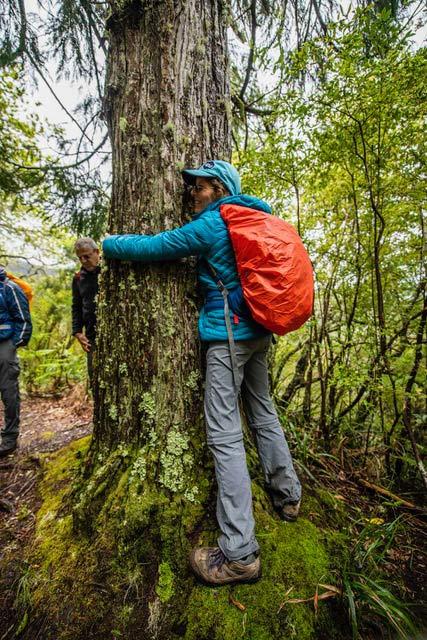 לחבק עץ... כשיורדים מהרכס - פוגשים שוב ביער