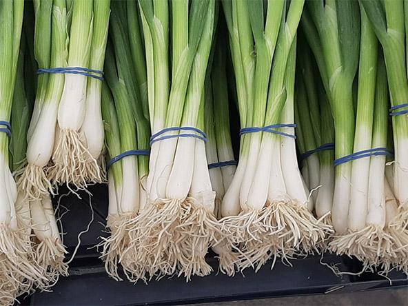 ירקות בשוק פלאז'ה. השוק מתקיים כל השבוע, אבל בסופי שבוע הוא גדול ותוסס במיוחד | צילומים: רותם בר כהן