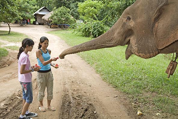 מפגש קרוב עם פיל, מהחוויות המרגשות שמציע טיול משפחות בתאילנד
