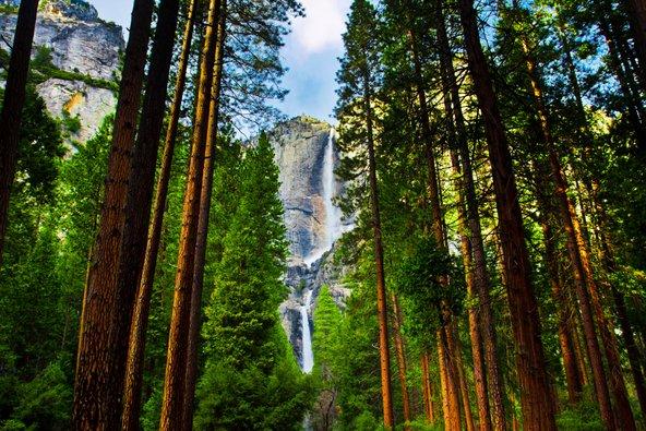 עצי סקויה ומפלים בפארק יוסמיטי
