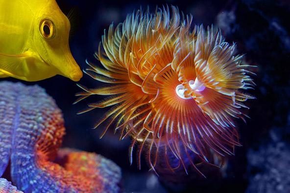 האיים שמול חופי בליז מהווים את מחסום שוניות האלמוגים השני בגודלו בעולם. גן עדן לחובבי צלילה