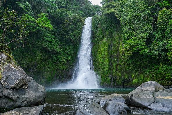 יערות מהווים כשליש משטחה של גינאה המשוונית