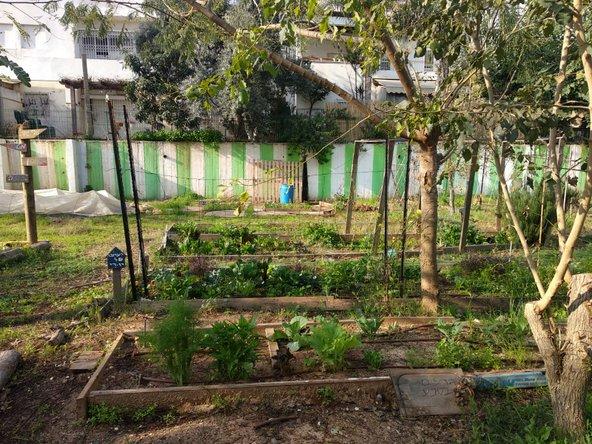 גינה קהילתית בכפר סבא, אחת מיני רבות בעיר | צילום: סימי שאואר