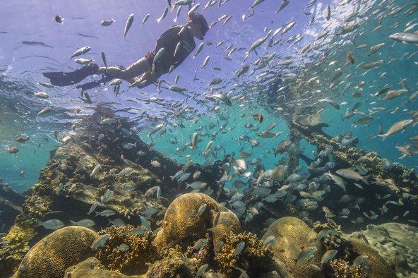 שונית האלמוגים בפארק הלאומי דריי טורטוגס | צילום: Brett Seymour, Submerged Resources Center