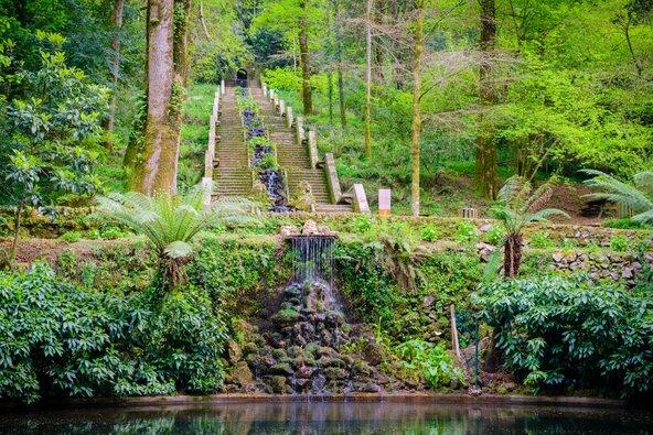 פינת חמד ביער בוסאקו