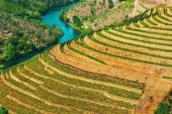 פורטו משמשת בסיס מצוין לטיול יין בעמק הדורו, בו נהר הדורו זורם למרגלות טרסות עטורות כרמים