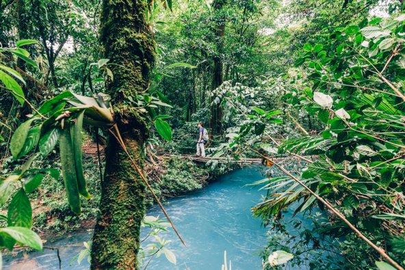 יער בניקויה. כבר הוכח שחיבור לטבע משפיע לטובה על בריאות ואריכות ימים