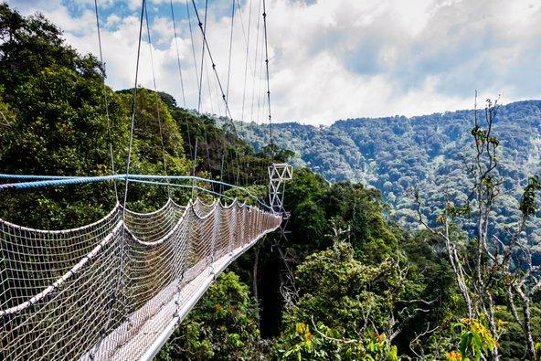 גשר תלוי ביער ניונגווה