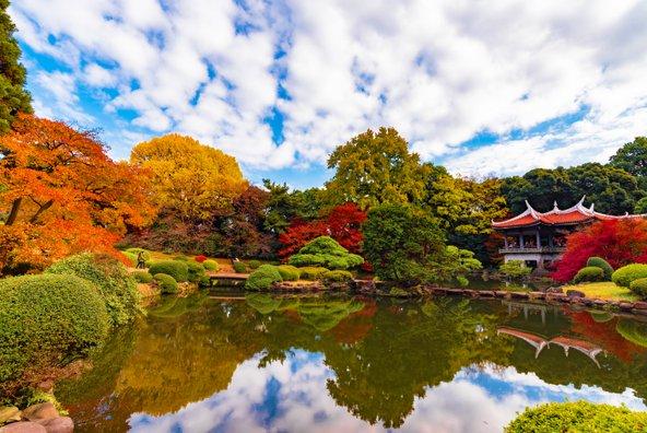 בסתיו יש שלכת נהדרת בגנים של טוקיו