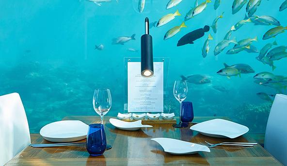 מהסוויטה למסעדה בלי לעלות ממצולות הים. מסעדת Ithaa במלון קונרד מלדיב