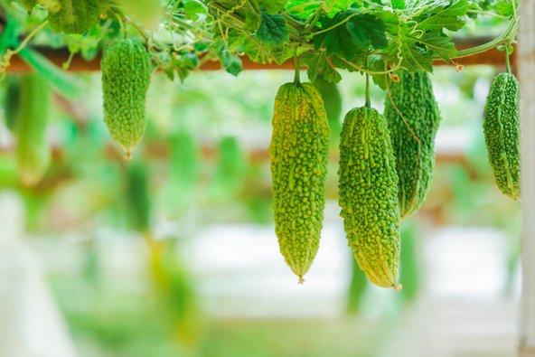 התזונה באוקינאווה מבוססת על מוצרי סויה וירקות ופירות ייחודיים לאזור כמו מלון מר