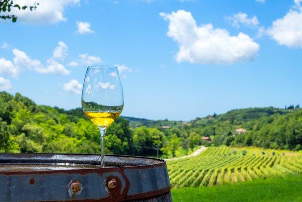 נרים כוסית: טיולי היין הכי טובים באירופה