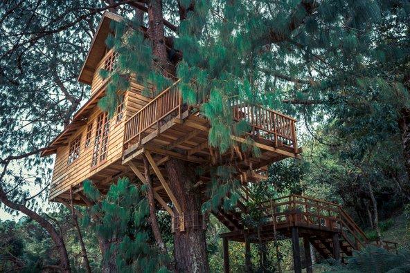 ב-airbnb יש לא רק דירות סטנדרטיות אלא גם אוהלים, טירות ובתים על עצים | צילומים: שאטרסטוק