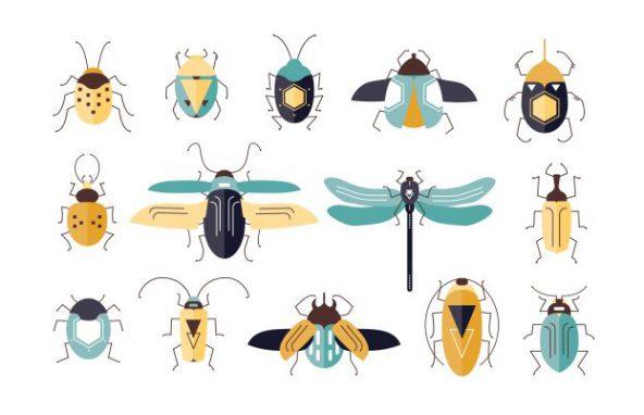 5 חרקים מסוכנים שכדאי להיזהר מהם כשמטיילים בארץ