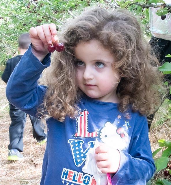 לא חשוב כמה דובדבנים נותרו על העצים, ילדים תמיד נהנים לקטוף ולאכול (וגם המבוגרים כמובן)