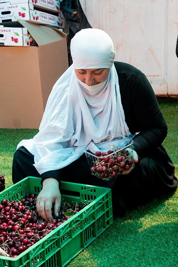 בגליל ובגולן, מגדלים דרוזים מוכרים את הפרי באופן עצמאי