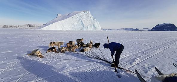 החוק הגרינלנדי אינו מתיר החזקה של כלבי מלמוט בתוך הכפר עצמו ולכן הם קשורים לים הקפוא