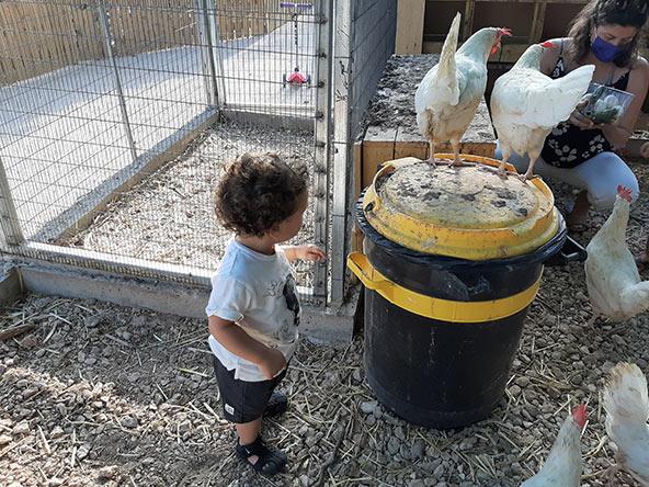 מפגש עם תרנגולות בחוות הנדיב
