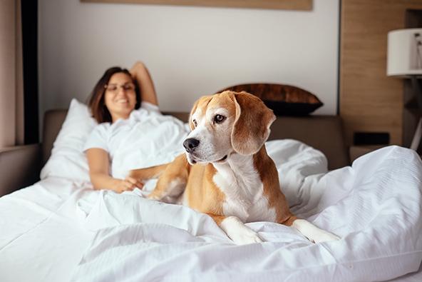 אפשר למצוא מלונות ידידותיים לכלבים לא רק באזורי טבע מרוחקים, אלא גם בערים הגדולות