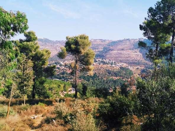 התמקמתי ביער ירושלים, בין עצי אקליפטוס אוסטרלים שמרגישים בבית