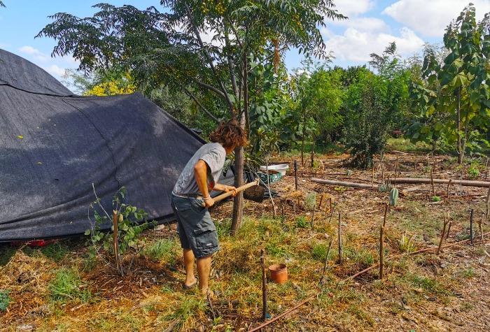 השתילים צמחו והיו לעצים, וחלקת היער הפכה לפיסת גן עדן. צילומים: רונן רז