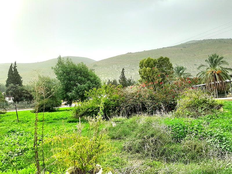 ירוק הוא העמק. עמק חרוד, ליד קיבוץ חפציבה. ברקע - הגלבוע | צילום: רותם בר כהן