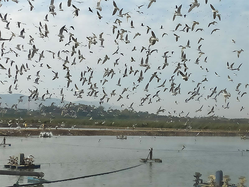 בריכות הדגים בעמק הן חגיגה לאוהבי ציפורים | צילום: דני הרן