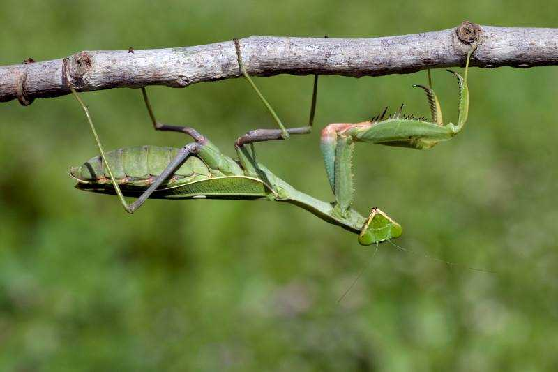גמל שלמה ירוק. צילום אייל ברטוב