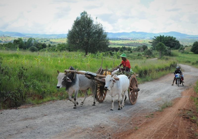 איכר ברמת השאן נוהג ברכב הכי נפוץ במינאמר (צילום ליאור עלמא וקסלר)