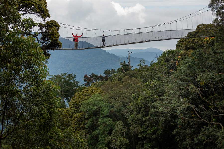 מסלול צמרות בשמורת ניוונגווה. צילום רפי קורן