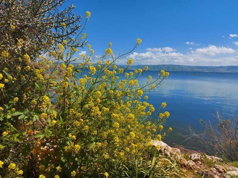גינוסר וצפון הכנרת: שלווה מושלמת