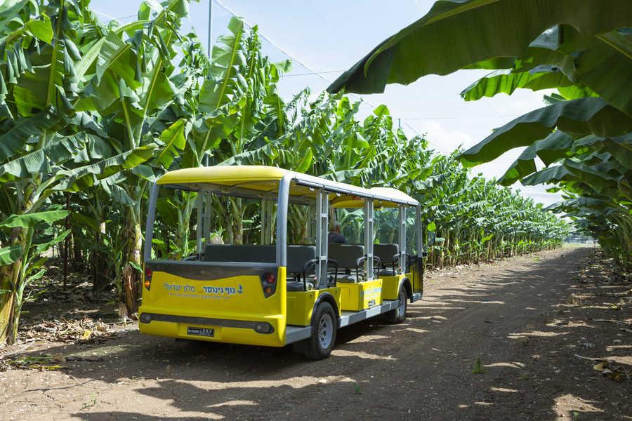 האוטובוס הצהוב במטע הבננות של הקיבוץ | צילום: אורי אקרמן