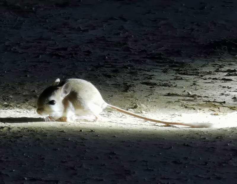 ירבוע קטן קפא על עמדו מול אלומת האור ויכולנו לרדת מהג'יפים ולהתקרב אליו