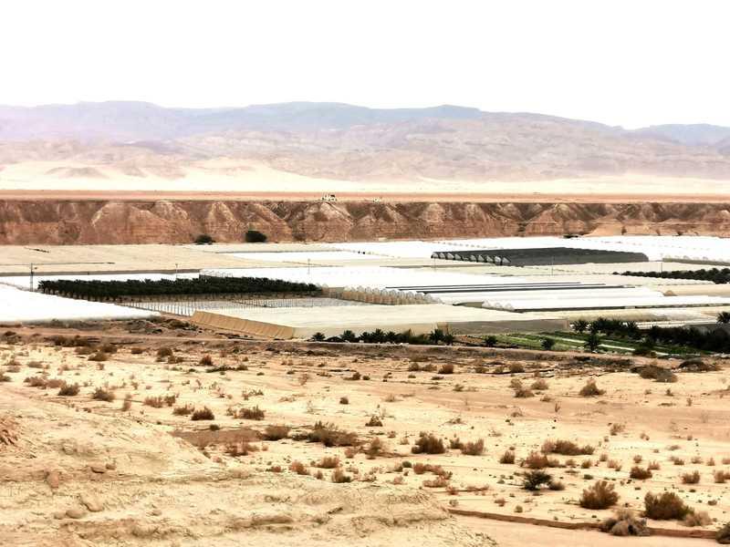 חממות של מושב עידן בערבה על רקע הרי אדום בירדן