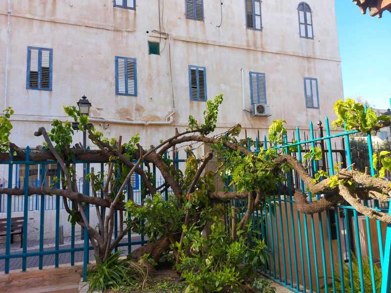 בית עמנואל כפי שהוא נראה מחצר הכנסייה שמולו