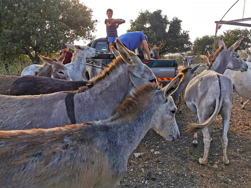 Haim talks about them affectionately and the deep emotional connection between him and the donkeys is evident, and between the members of the whole family who are united in their affection for donkeys