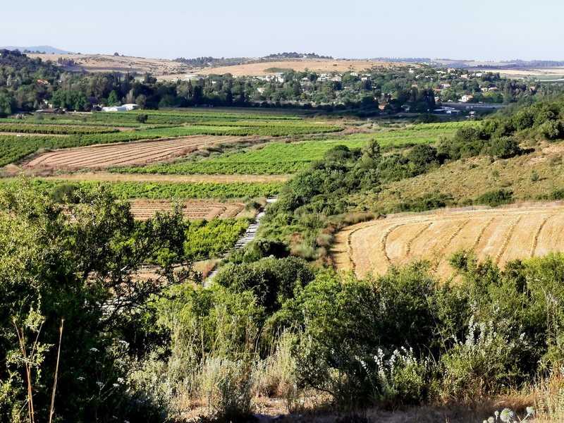 סביב גבעת עדה קמו המושבים אביאל, עמיקם, גבעת נילי, בית הספר אלוני יצחק, כפר גליקסון, וקיבוץ רגבים