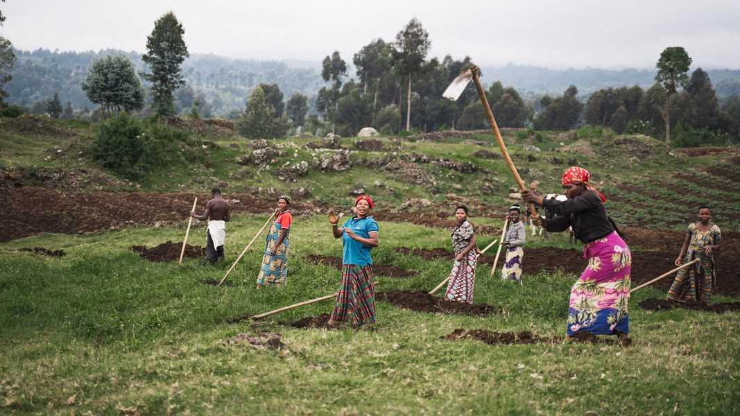 חקלאים מעבדים את השדות למרגלות היער בשמורת וולקנו. המדינה מציעה לפצות אותם אם יעברו לעבד את האדמה באזורים פחות רגישים מבחינה אקולוגית