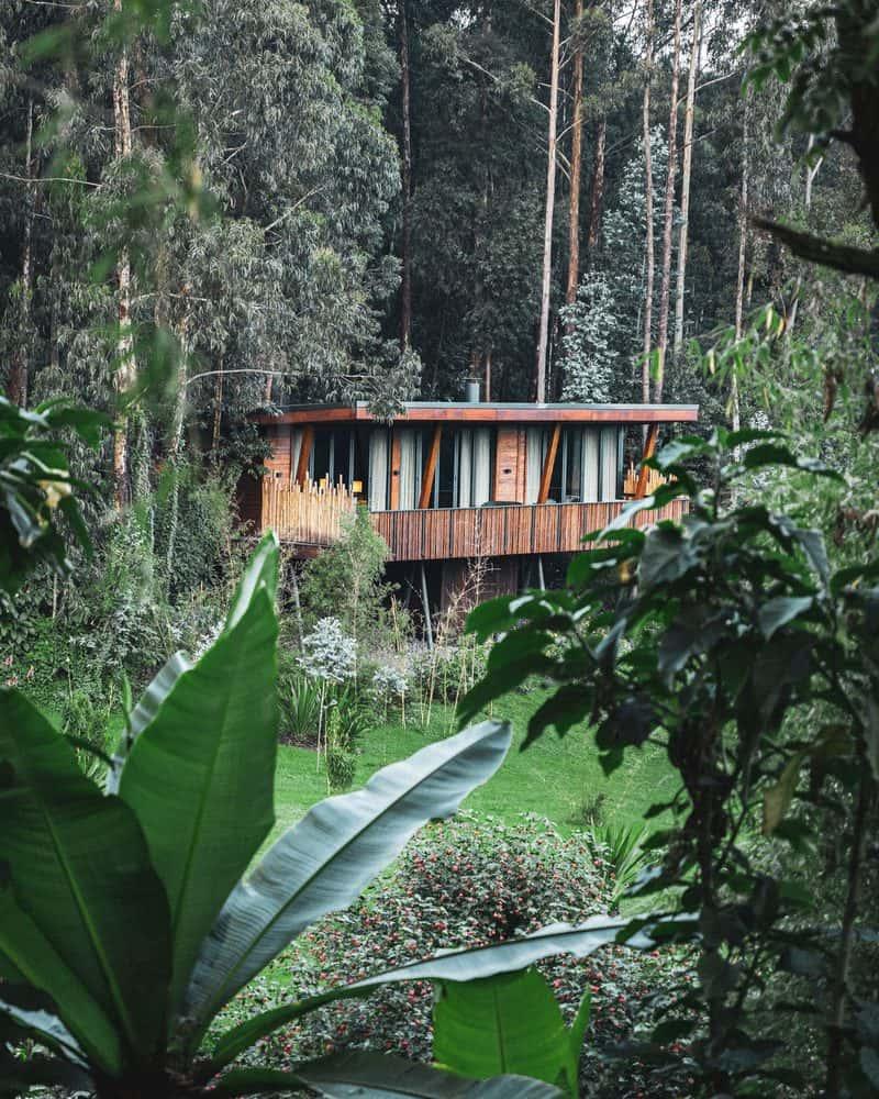 מלון One&Only Gorilla's Nest, למי שרוצה למקסם את חווית הגורילות