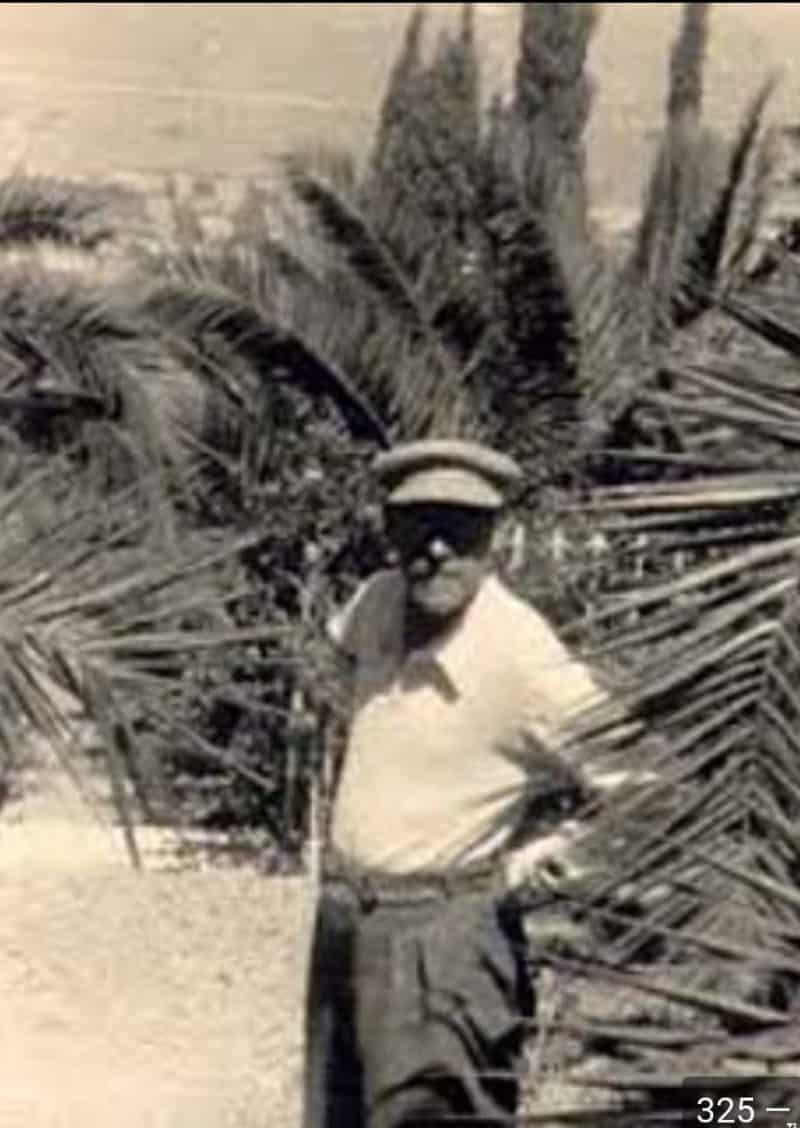 קורצ'אק בלי עניבה בין הדקלים בעין חרוד. שדרת הדקלים קיימת עד היום בעין חרוד.