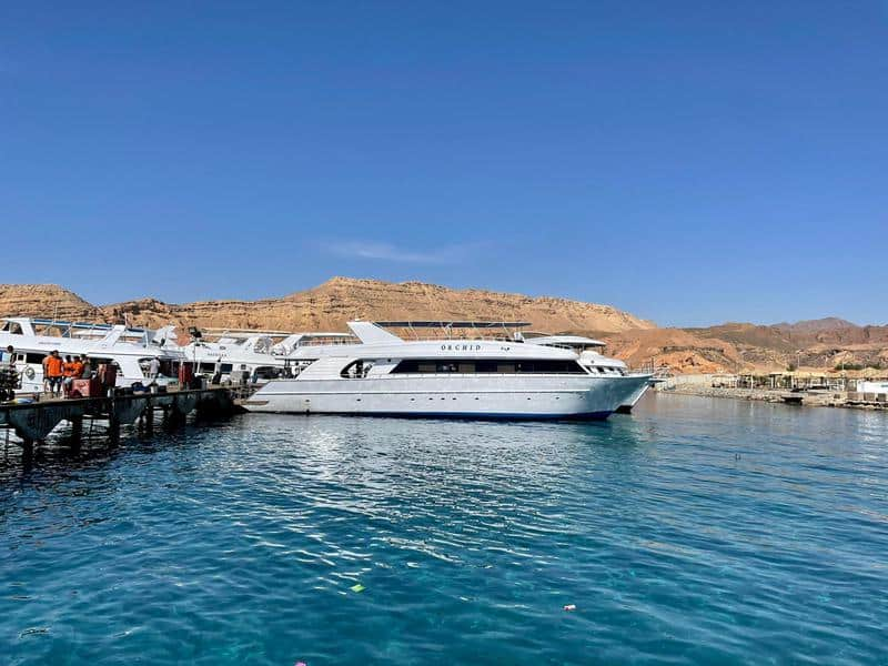 סירות הצלילה בנמל בשארם. צילום: דפנה גרגיר