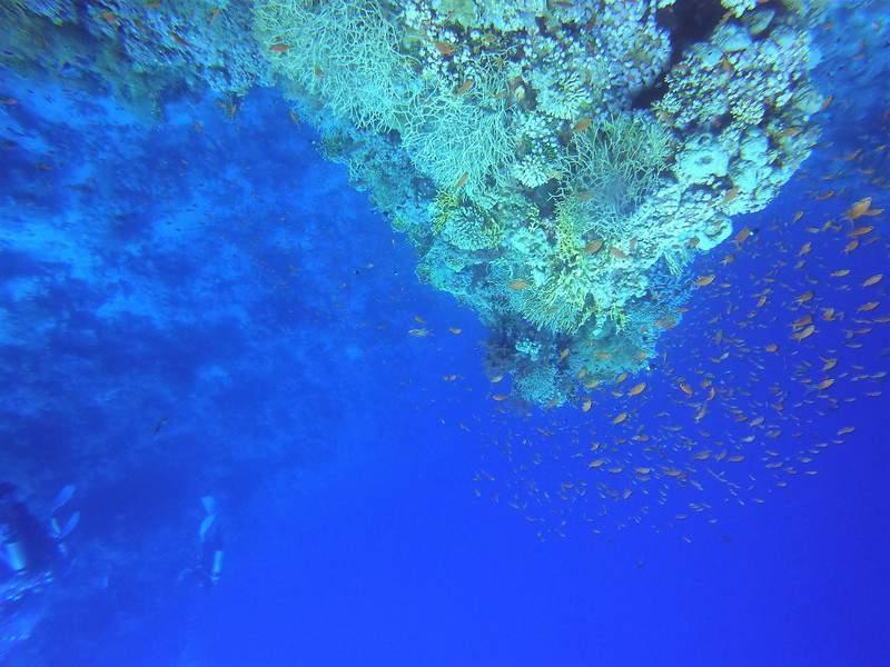 קירות אלמוגים. צילום: צח לביא