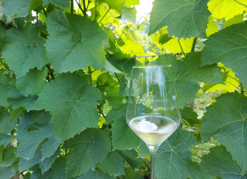 הכרם האורגני של פרזה דופל וכוס של יין קיצי מרענן מהיקב המשפחתי