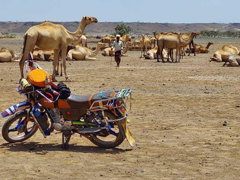 בני שבט הגברה, אנשים גבוהים דקי גו ויפי מראה, למדו לחיות בתנאים הקשים. הם מחזיקים עדרים עצומים של גמלים ועזים ועל כך גאוותם