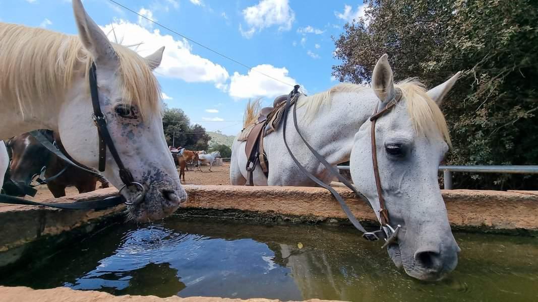 חווית הרוכבים. רכיבה על סוסים כלולה בחוויה   צילום: מיכה בילקמן